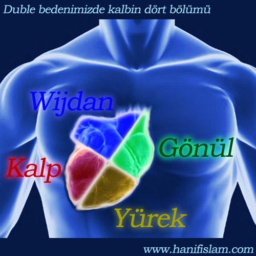239-04-kalp-gonul-zijdan-yurek