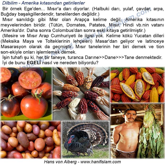 067-12-amerikadan-gelen-seyler-domates-patates-tutun-hindi-cacao