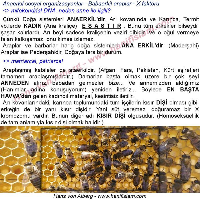 068-07-anaerkil-sosyal-organizasyonlar
