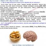 070-10-kvr-dilbilim-ceviz-beyin